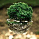 Trattamenti ecologici – perché effettuarli?